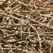 Stock Photo: Branches texture