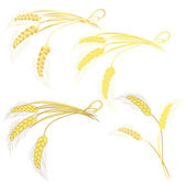 Golden wheat — Stock Vector