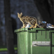 Cat on the container — Stockfoto