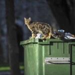 gatto sul contenitore — Foto Stock