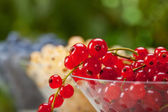 Fresh Currants — Stock Photo