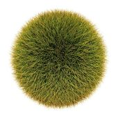 Grass sphere — Stock Photo