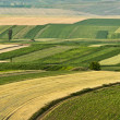 Cultivated fields during summer time — Stock Photo