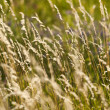 Field of grass — Stockfoto