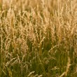 Field of grass — Stock Photo