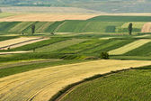 Cultivated fields during summer time — Stok fotoğraf