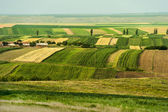 Cultivated fields during summer time — Stock fotografie
