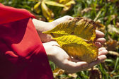 Woman hands with autumn leaves — Stock Photo