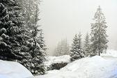 Zimowy krajobraz dekoracje z płaskim county i lasy — Zdjęcie stockowe