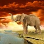 Elephant retro photo effect — Stock Photo #19525779