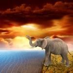Elephant retro photo effect — Stock Photo #19526059