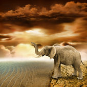 Elephant retro photo effect — Stock Photo