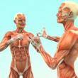 Human Anatomy - Zdjcie stockowe
