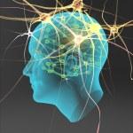 Human nerve cells — Stock Photo
