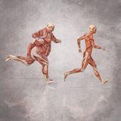 Menselijk lichaam uitgevoerd — Stockfoto