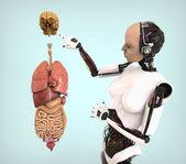 Insanımsı ile insan anatomisi — Stok fotoğraf