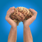 Brain in the hands — Stock Photo