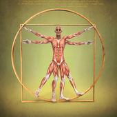 витрувианский человек — Стоковое фото