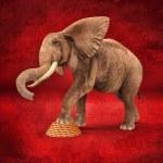 Elephant retro effect — Stock Photo #20035599
