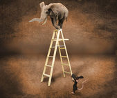 Elephant on a ladder — Stock Photo