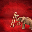 Elephant on a ladder — Foto Stock