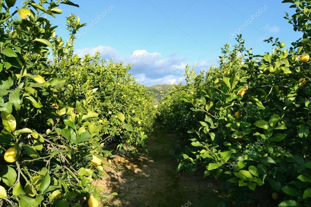 Plantacin arboles i humedal del burro plantaci 243 n de for Viveros frutales wikipedia