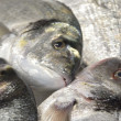 Type of sea bream fish — Stock Photo