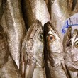 Mediterranean hake — Stock Photo