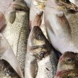 Stock Photo: Bass fish