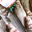 Bass fish — Stock Photo