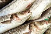 Bass fish — Stock Photo