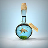Shark in a Bottle — Stock Photo