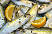 Mackerel fish — Stockfoto