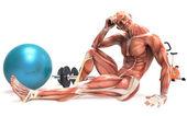 Lidské tělo dělá sport — Stock fotografie