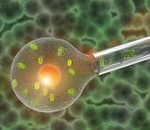 Clonación de células — Foto de Stock