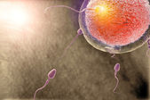 The moment of fertilization — Stock Photo