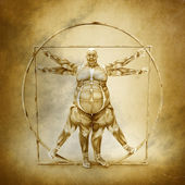 Anatomy of Vitruvian Man — 图库照片