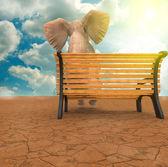 Elefante sentado — Foto Stock