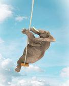 Elefant auf einer schaukel — Stockfoto