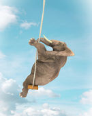 Elephant on a swing — Stock Photo