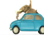 Słoń w mały samochód włoski — Zdjęcie stockowe
