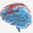 Stock Photo: Nerve Cells in Brain