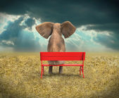 Elephant sitting on a bench — Stock Photo