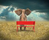 Elephant sitting on a bench — Stock Photo