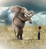 Elephant trained — Stock Photo