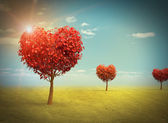 Heart shaped Trees — Stock Photo
