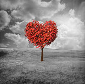 Heart shaped tree — Stock fotografie