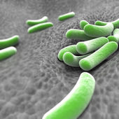 Microscopic view of bacteria — Stock Photo