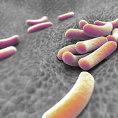 Microscopic view of bacteria — Stock Photo