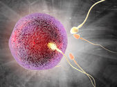 The process of fertilization — Stock Photo